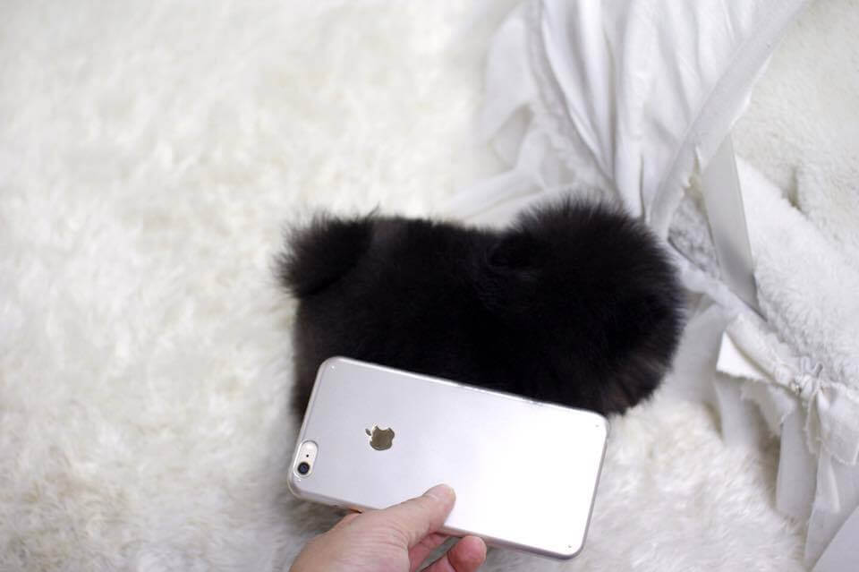 Slater Black Micro Teacup Pom