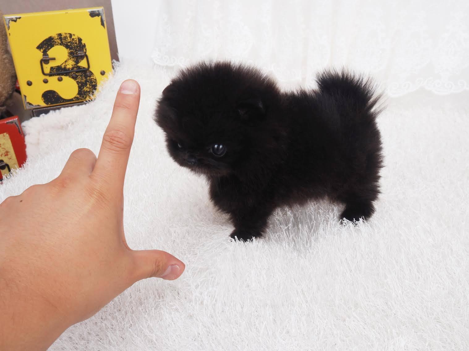 Prada Black Micro Pom