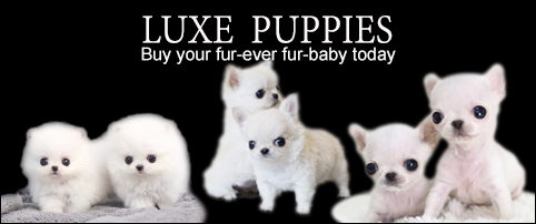 Buy Posh Pups