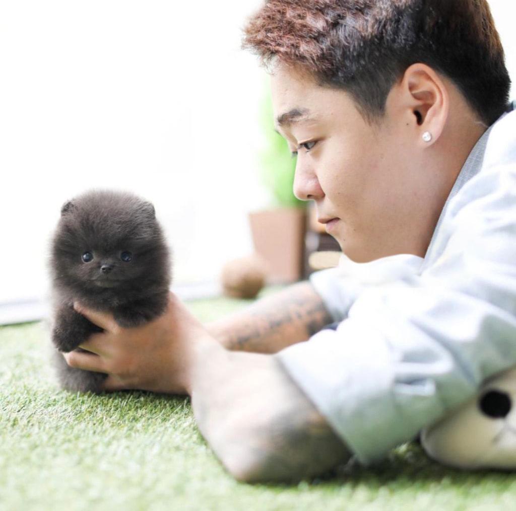 Joshua Micro Pomeranian for Sale